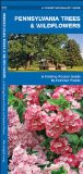 Pennsylvania Trees & Wildflowers: A Folding Pocket Guide to Familiar Plants (Pocket Naturalist Guide Series)